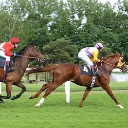 horse racing SYDNEY